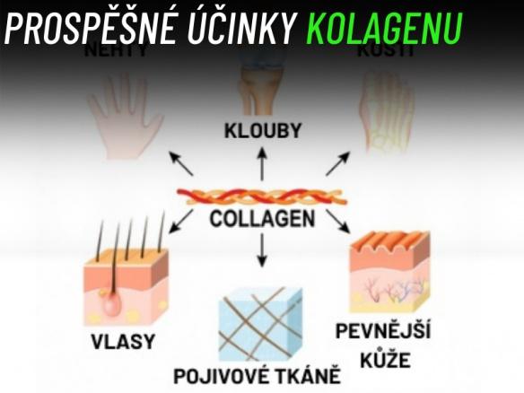 Podle čeho vybrat správný kolagen? Jaké má prospěšné účinky? Kolagen na klouby a proti vráskám.